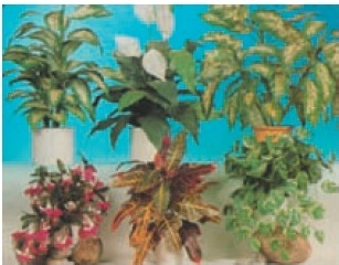 دانلود کتاب آشنایی با گیاه شناسی