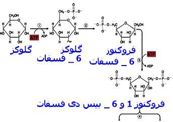 دانلود دانلود پاورپوینت روش های تولید آنزیمی و شیمیایی قند مایع گلوکزی